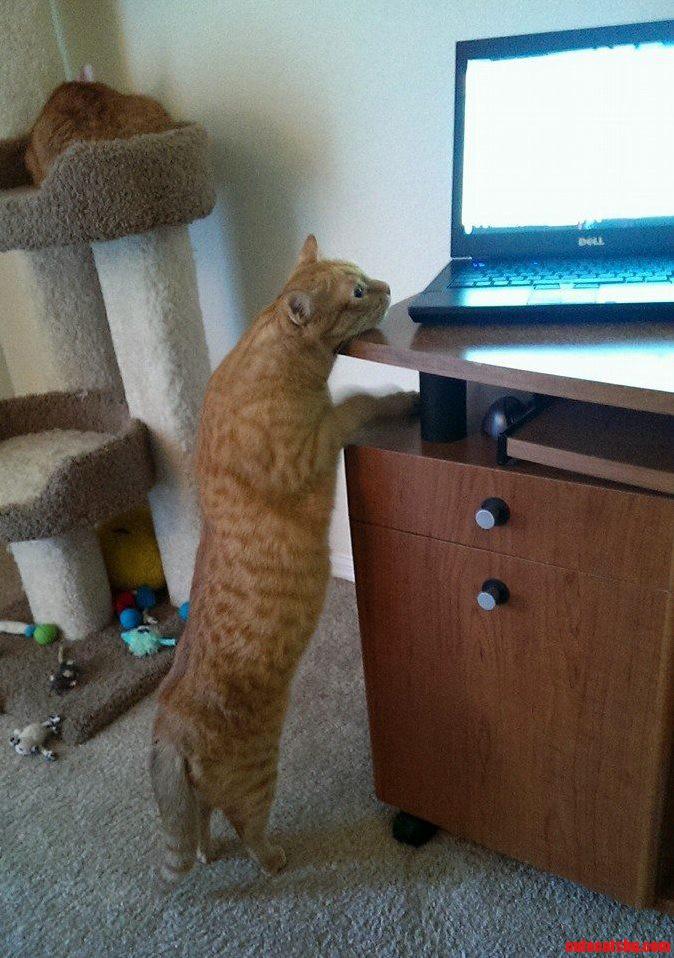 Desmond The Proofreader Kitty.