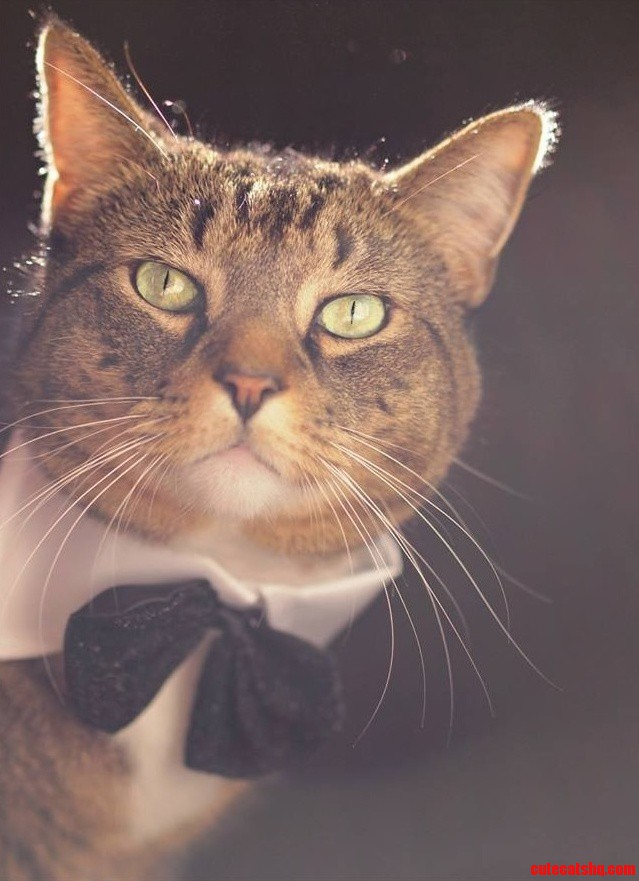 Felix Looking Dapper In A Bow Tie