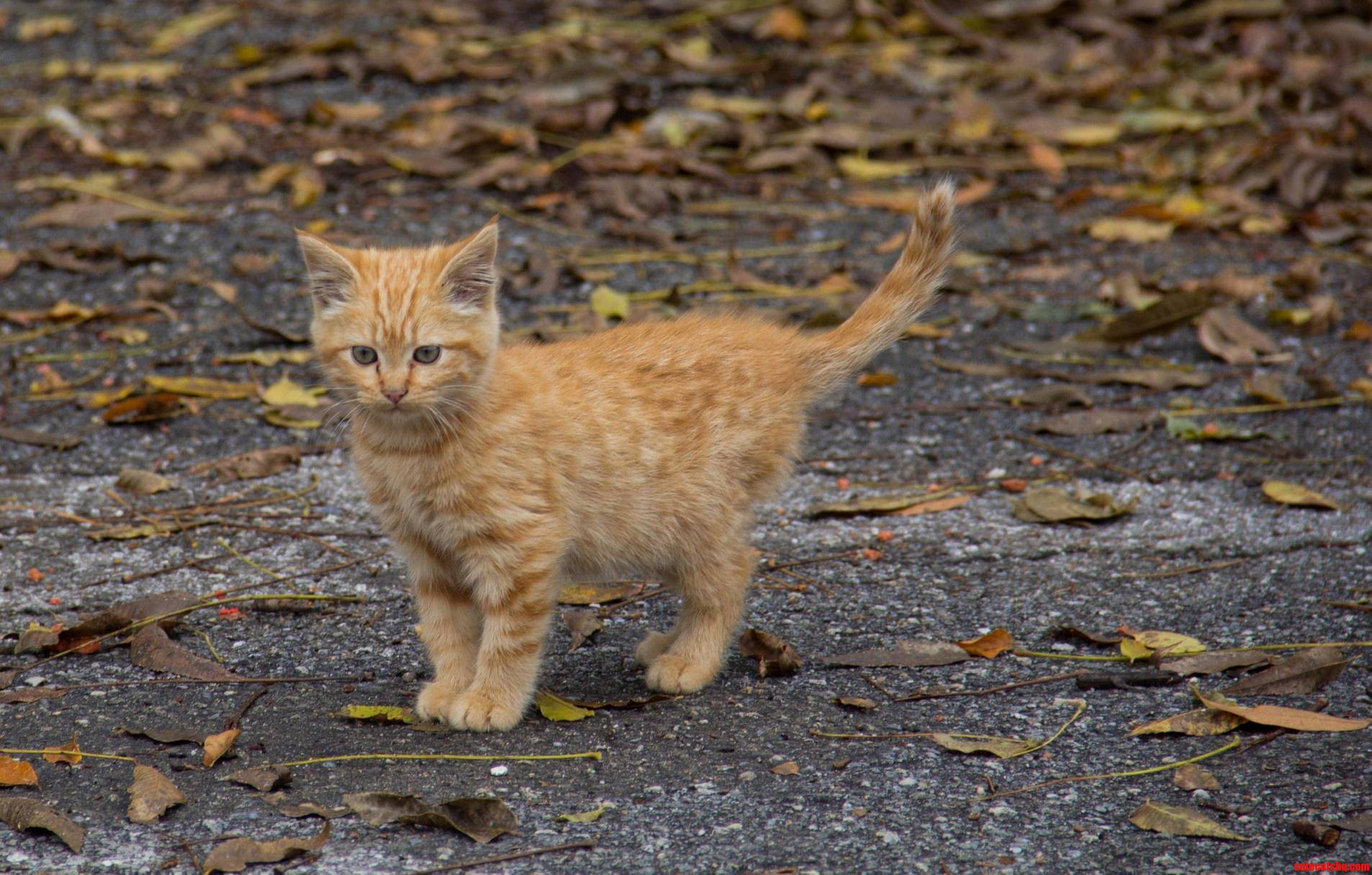 Found This Scrappy Little Guy Playing With Leaves In A Parking Lot