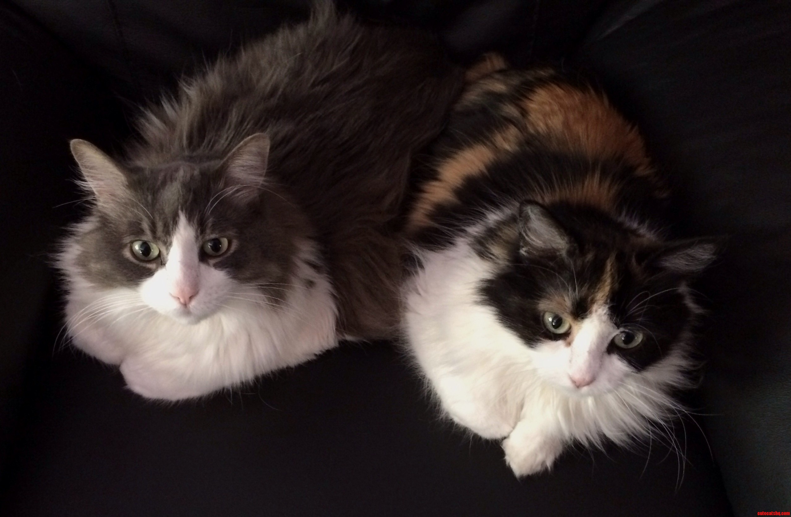 Fuzzy Seatwarmers. Thomas And His Daughter.