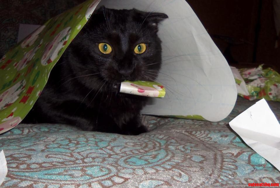 Geordi Helping With Gift-Wrapping X-Post From Rchristmas