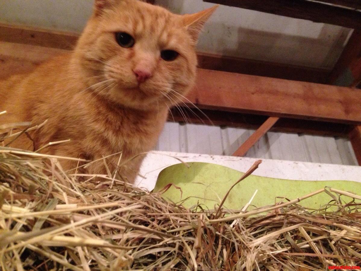 Grumpy Barn Cat