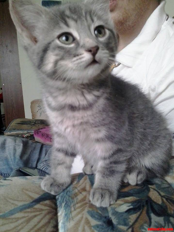 Hard To Believe This Cutie Hasnt Found A Home Yet
