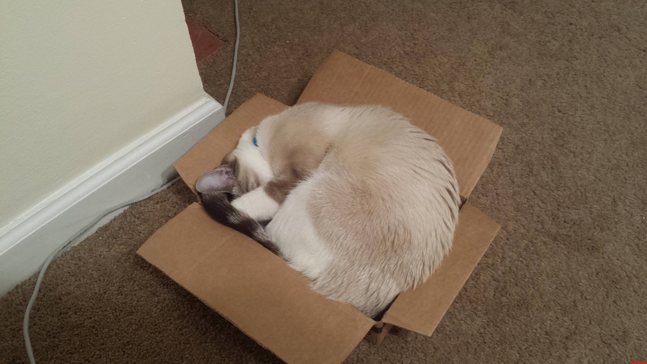 He Doesnt Really Fit But He Thinks He Does.