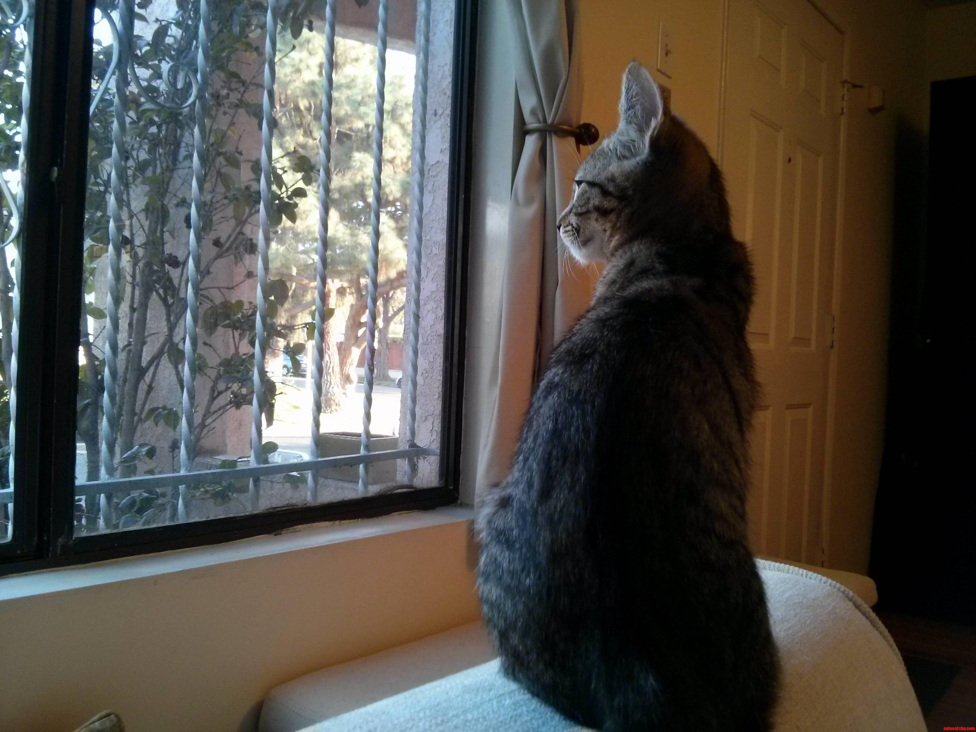 He Loves The Window