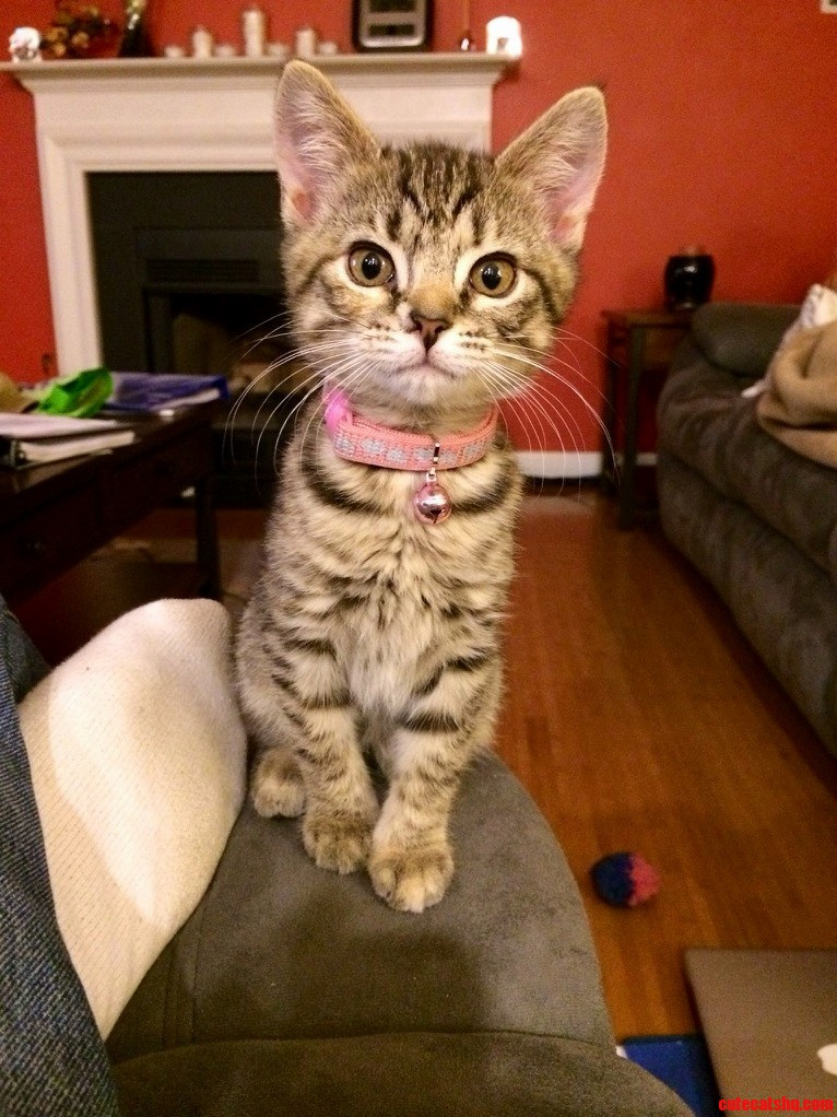 Help Name Our Rescue Kitty