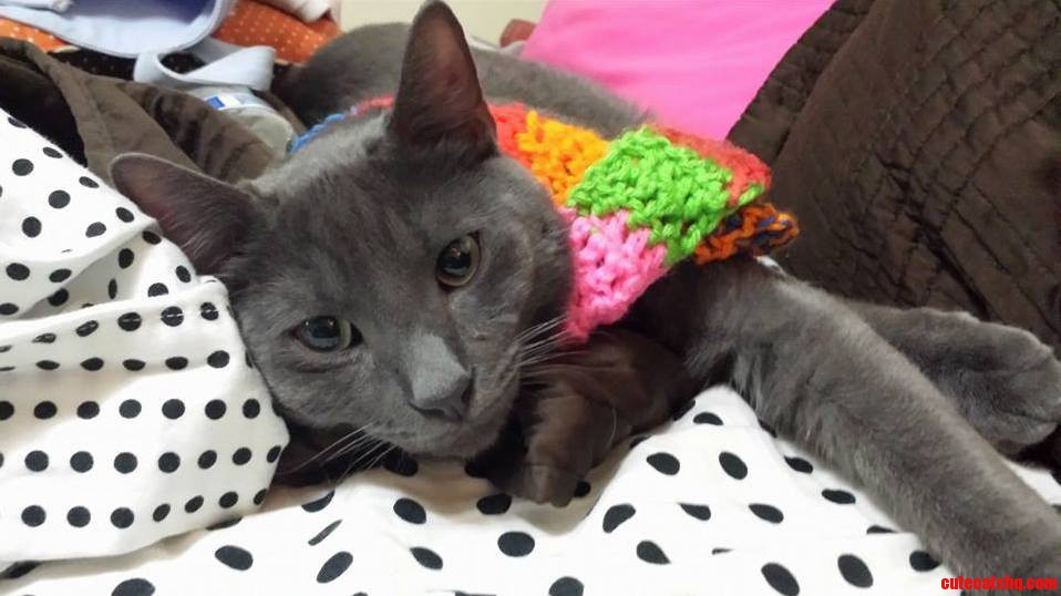 Here Is A Picture Of My Cat Wearing A Scarf….