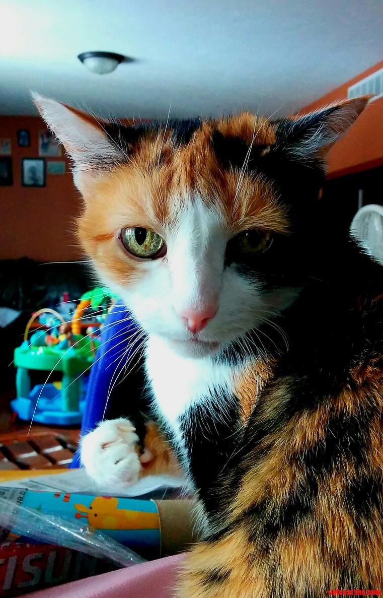 Hi Rcats Meet Fygarr. Feral Rescue.