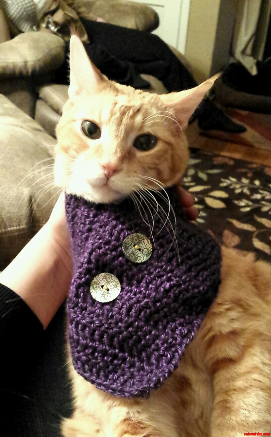 Hipster Kitty | Cute cats HQ - Pictures of cute cats and ...