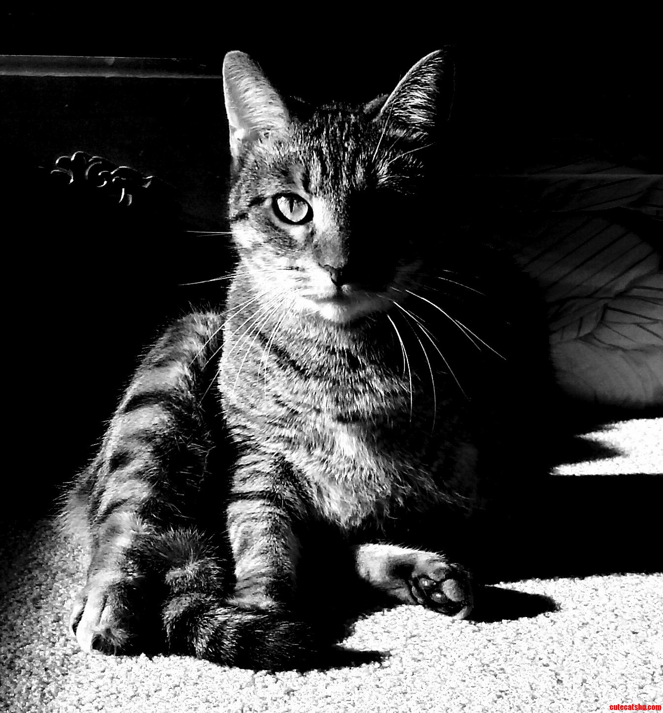 Hooli In Black And White