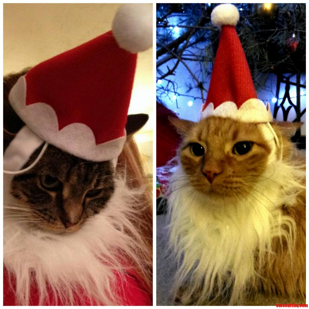 I Dont Always Torture My Cats….But When I Do It Is In The Spirit Of Christmas