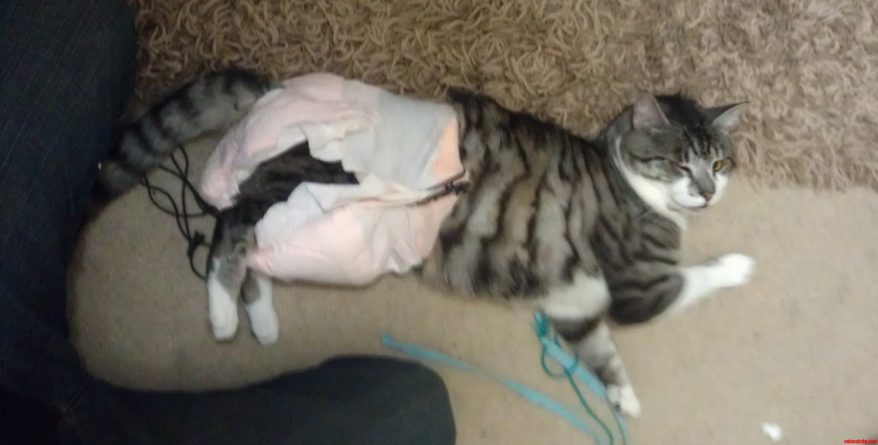 I Put A Diaper On My Cat And He Winked At Me. We Totally Had A Moment.