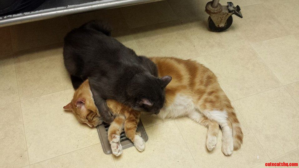 I Volunteer At A Free-Roaming Cat Shelter. This Is What Happens Every Year When It Gets Cold.