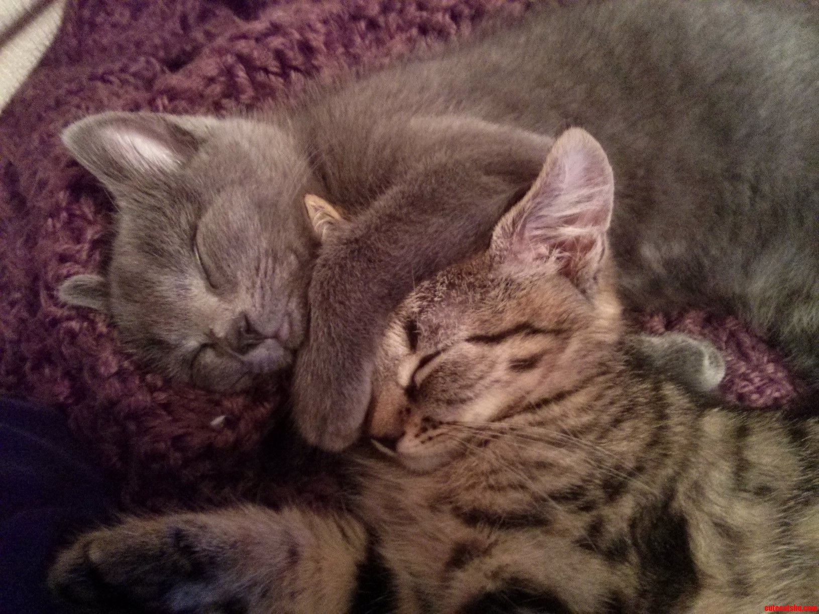 Inseparable Xpost From Raww