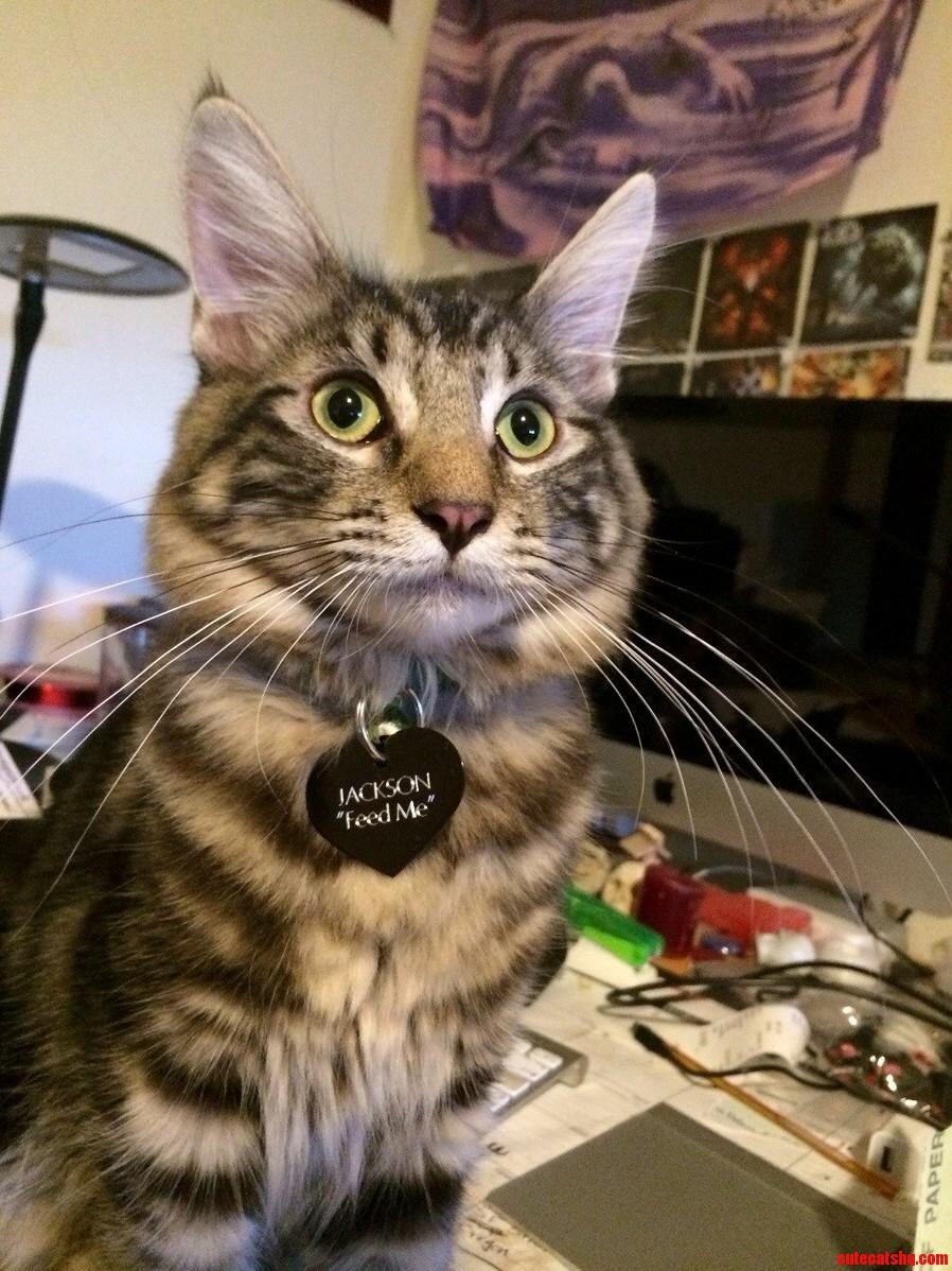 Jackson Sittin Pretty With His New Collar.