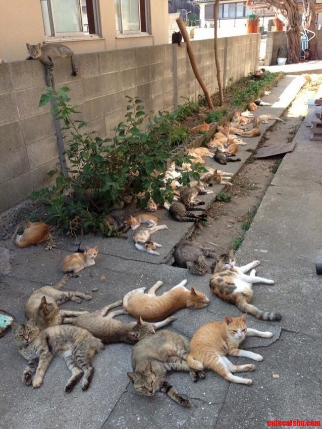 Japans Cat Island Xpost Rpics