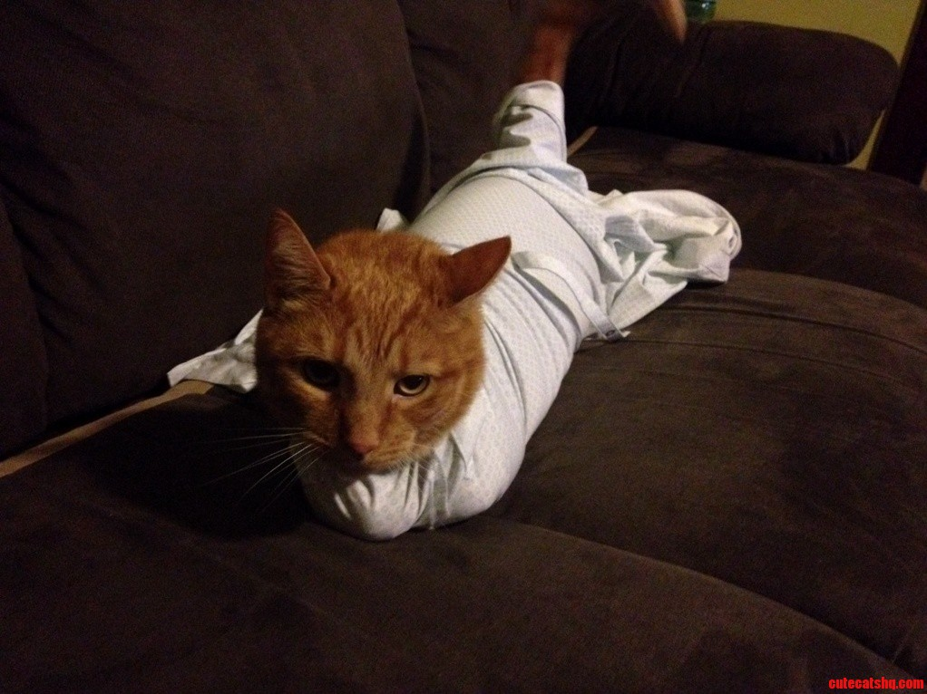 Joined Just To Share This Fat Cat. Meet Quin. He Likes When I Put Him In My Shirt Sleeves.