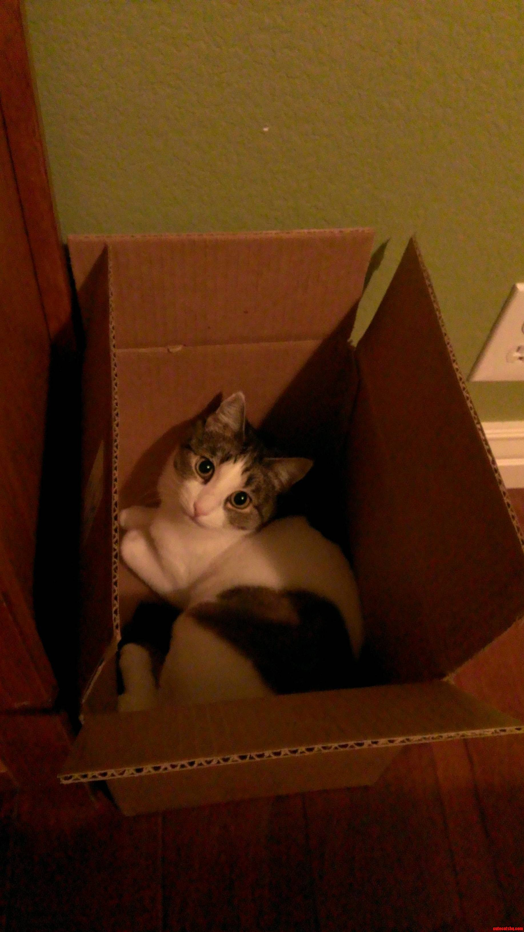 Just In A Box.