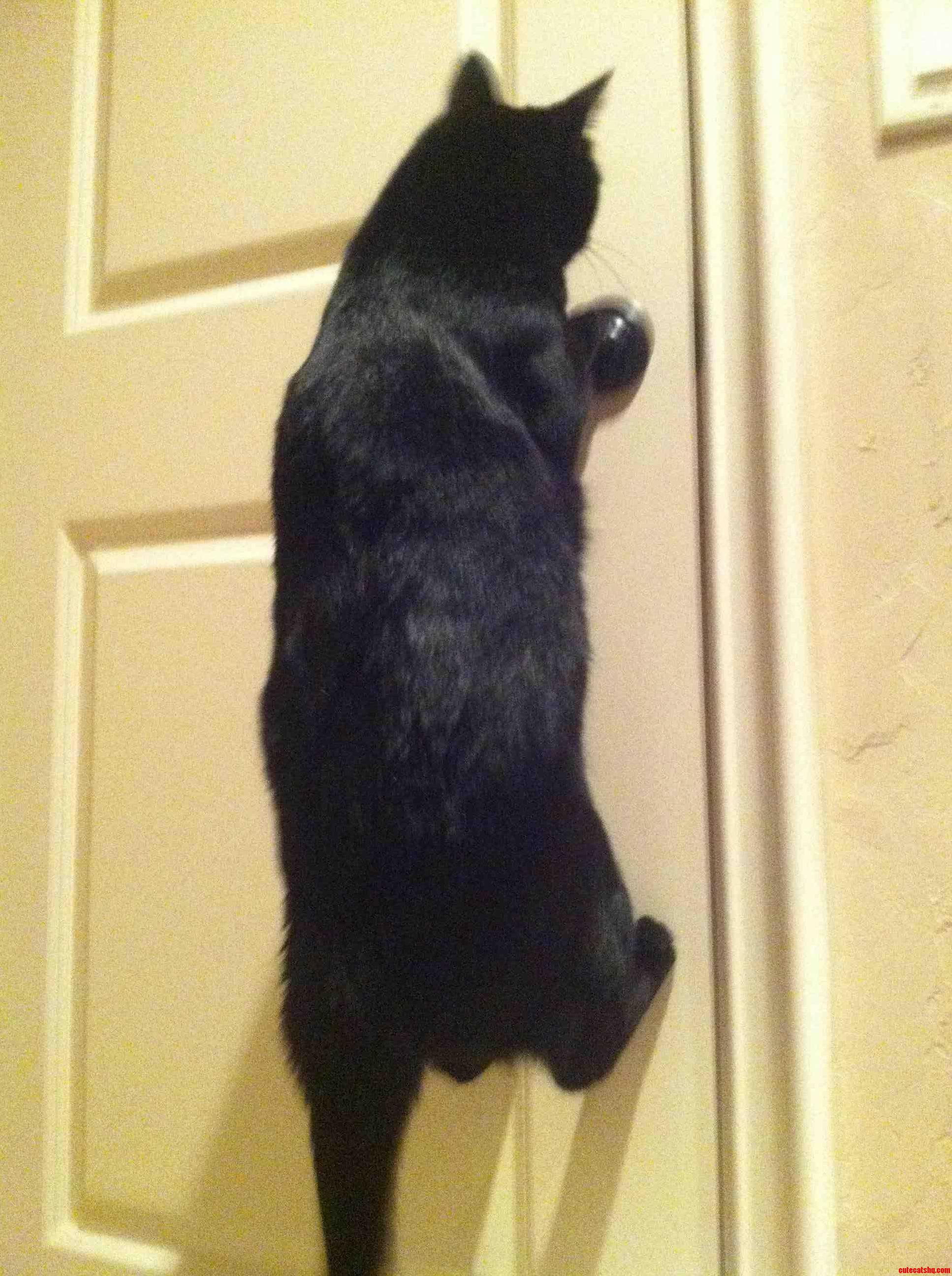 Just My Cat Batman You Know Opening Up Doors And Stuff.