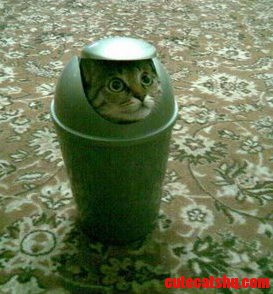 Kitty In The Garbage Can
