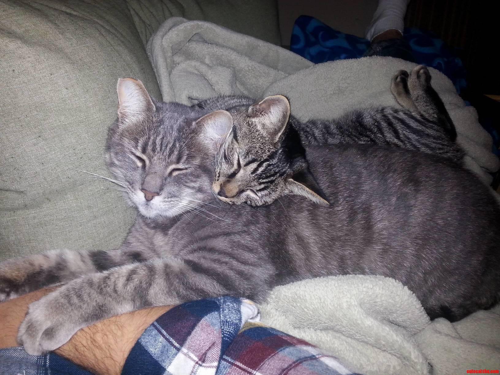 Kitty Love Kiki And Molly Maul