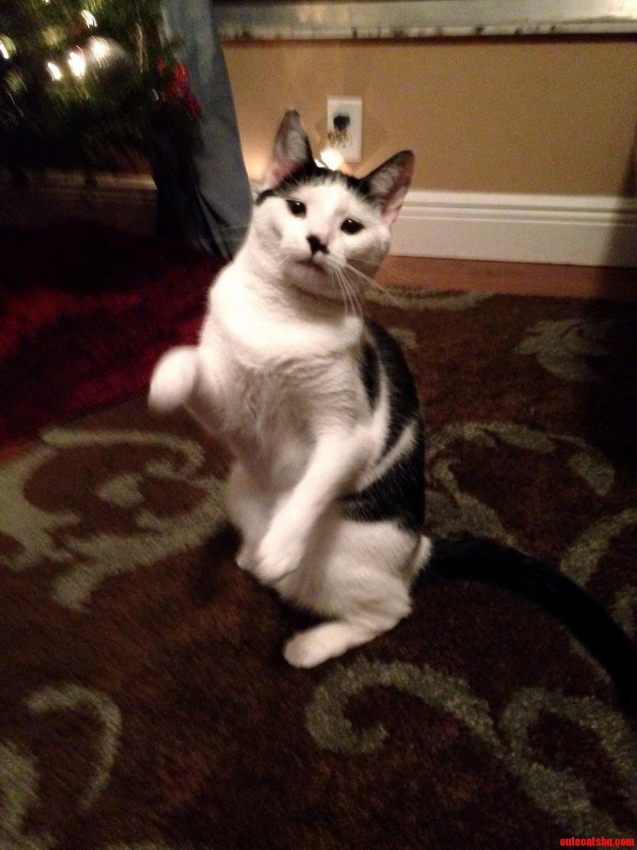 Kung Fu Kitty Action Shot