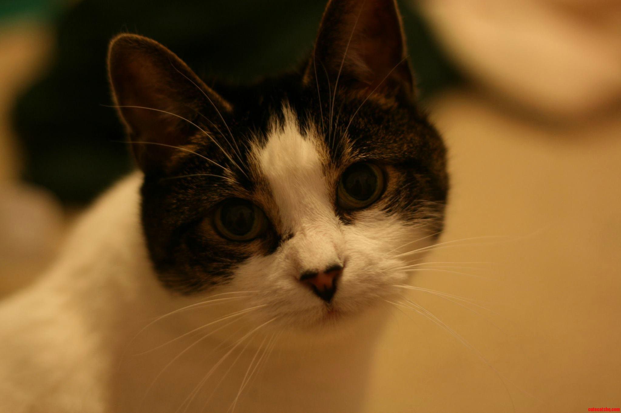 Lillie Queen Of The Feline Hegemony