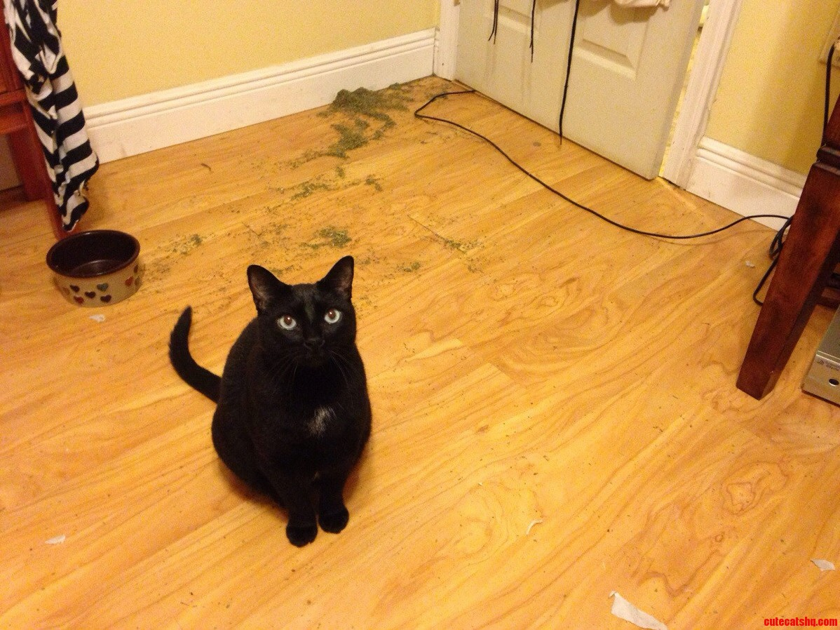 Look Who Doesnt Care That They Just Broke An Entire Container Of Catnip All Over My Floor This Wanker Right Here.