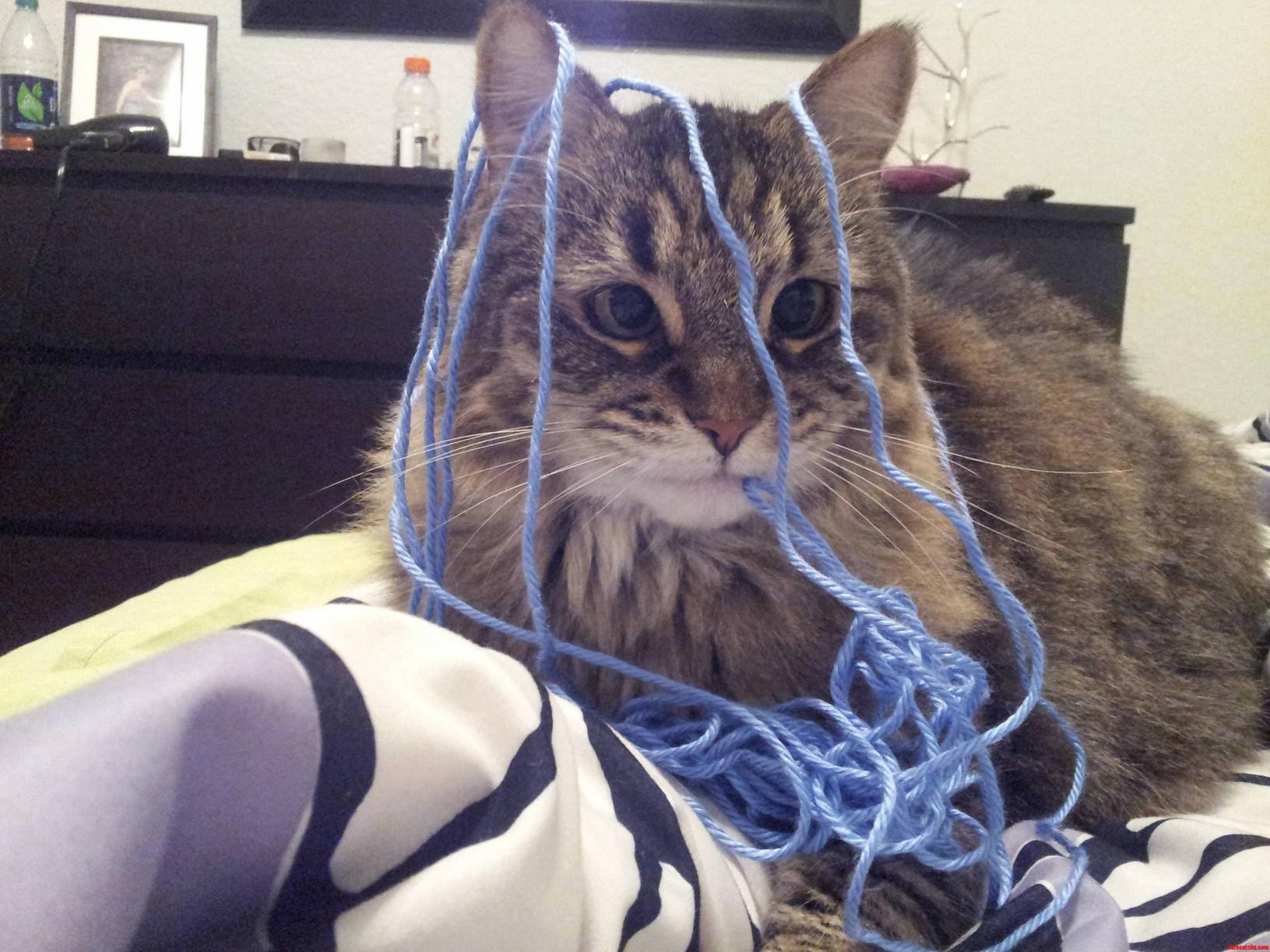 Madeline Found My Knitting