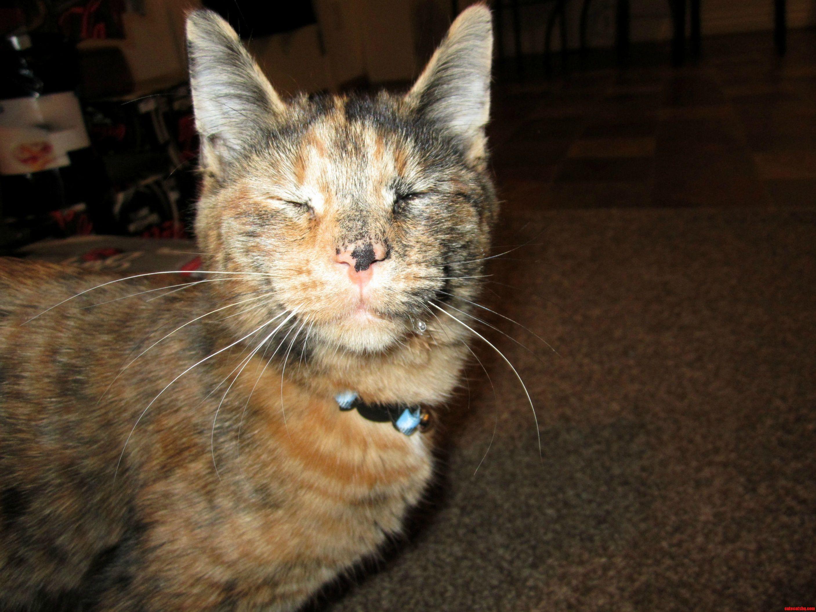 Meet My Rescue Kitten Sheik
