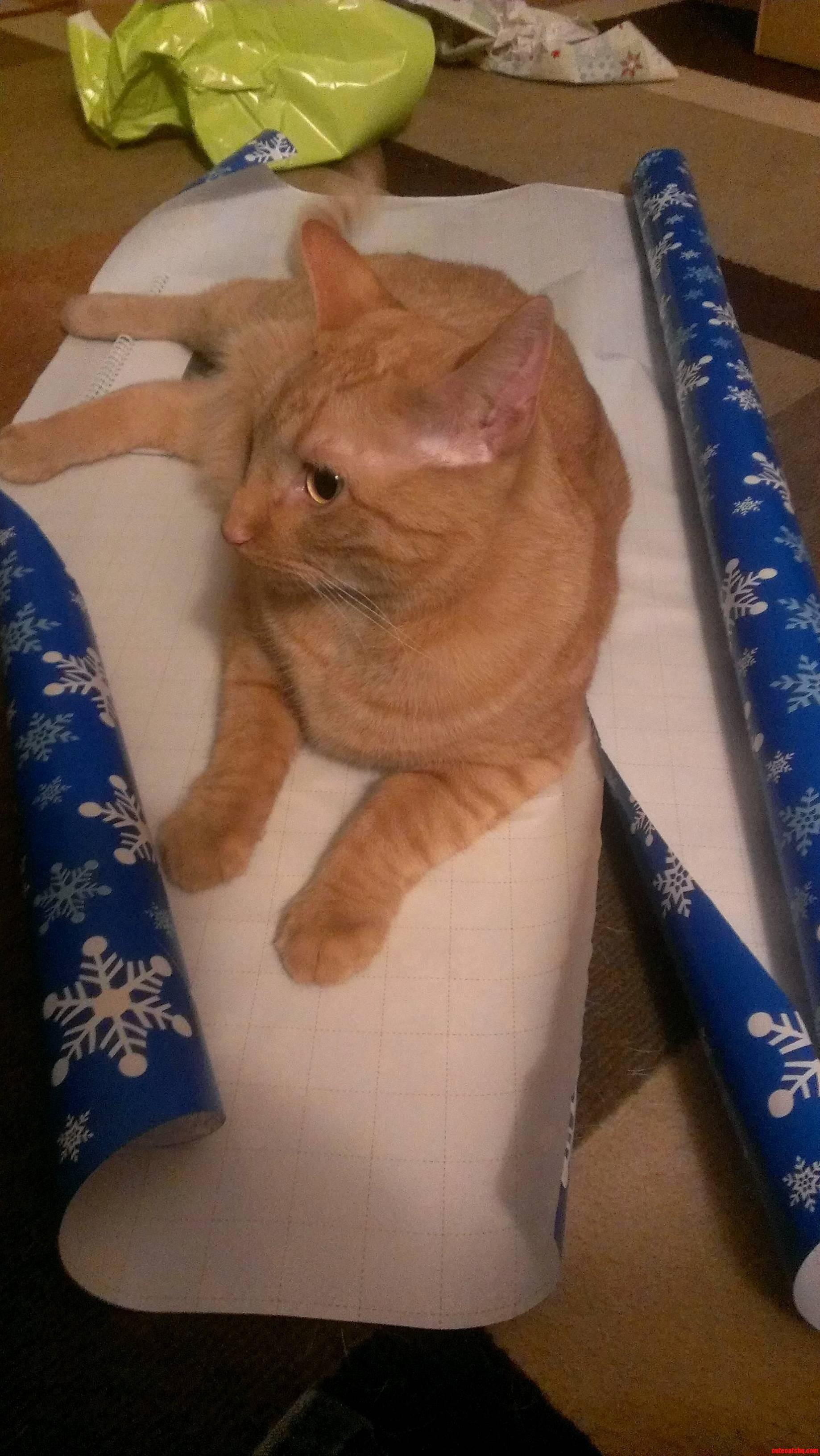 Meet Scotty The Reason It Takes So Long To Wrap Presents.