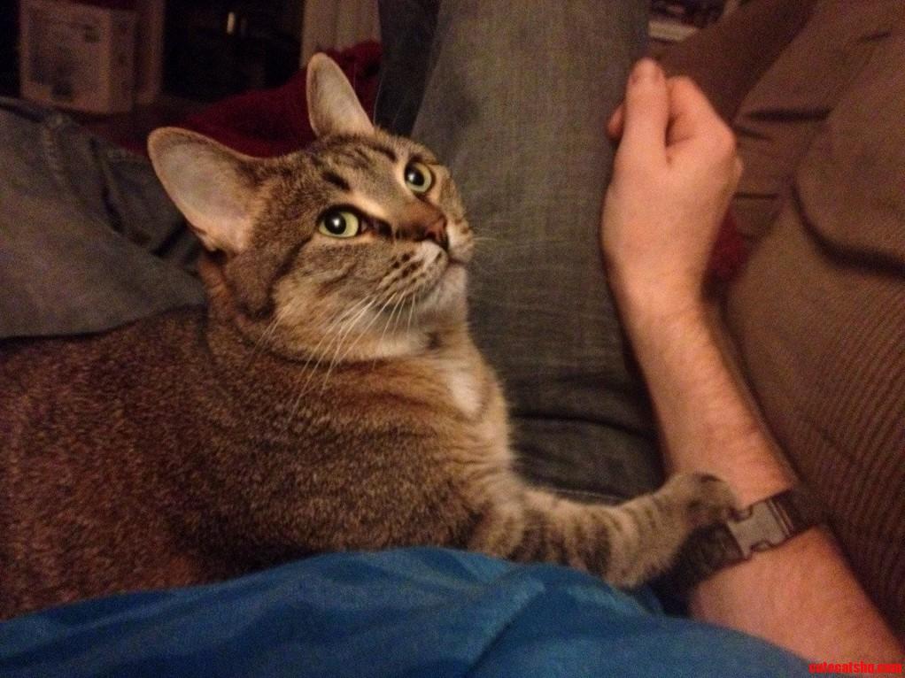 Meet The Little Shit Bobcat