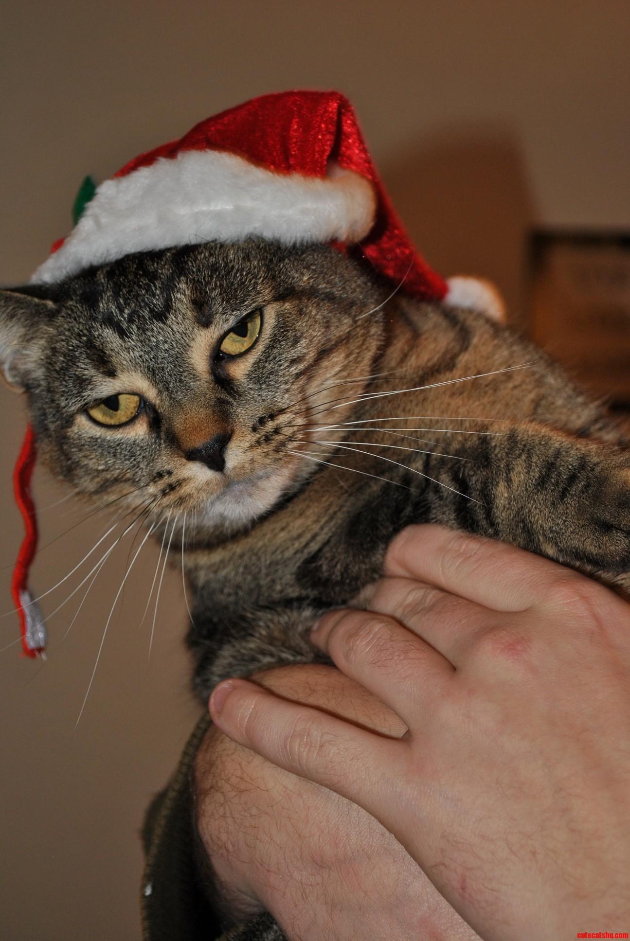 Merry Ing Christmas Human.