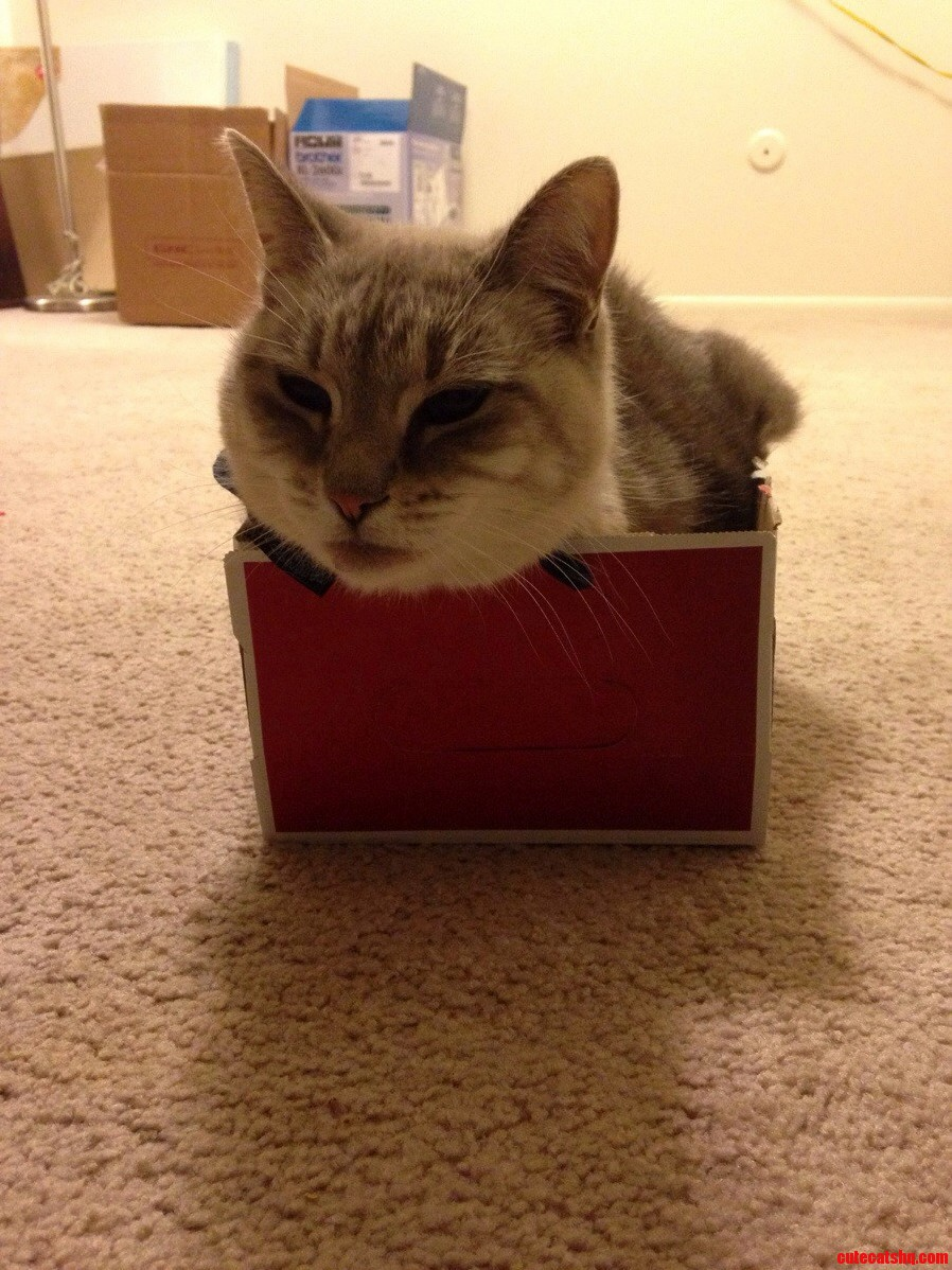 My 14-Pound Cat In A Shoebox.