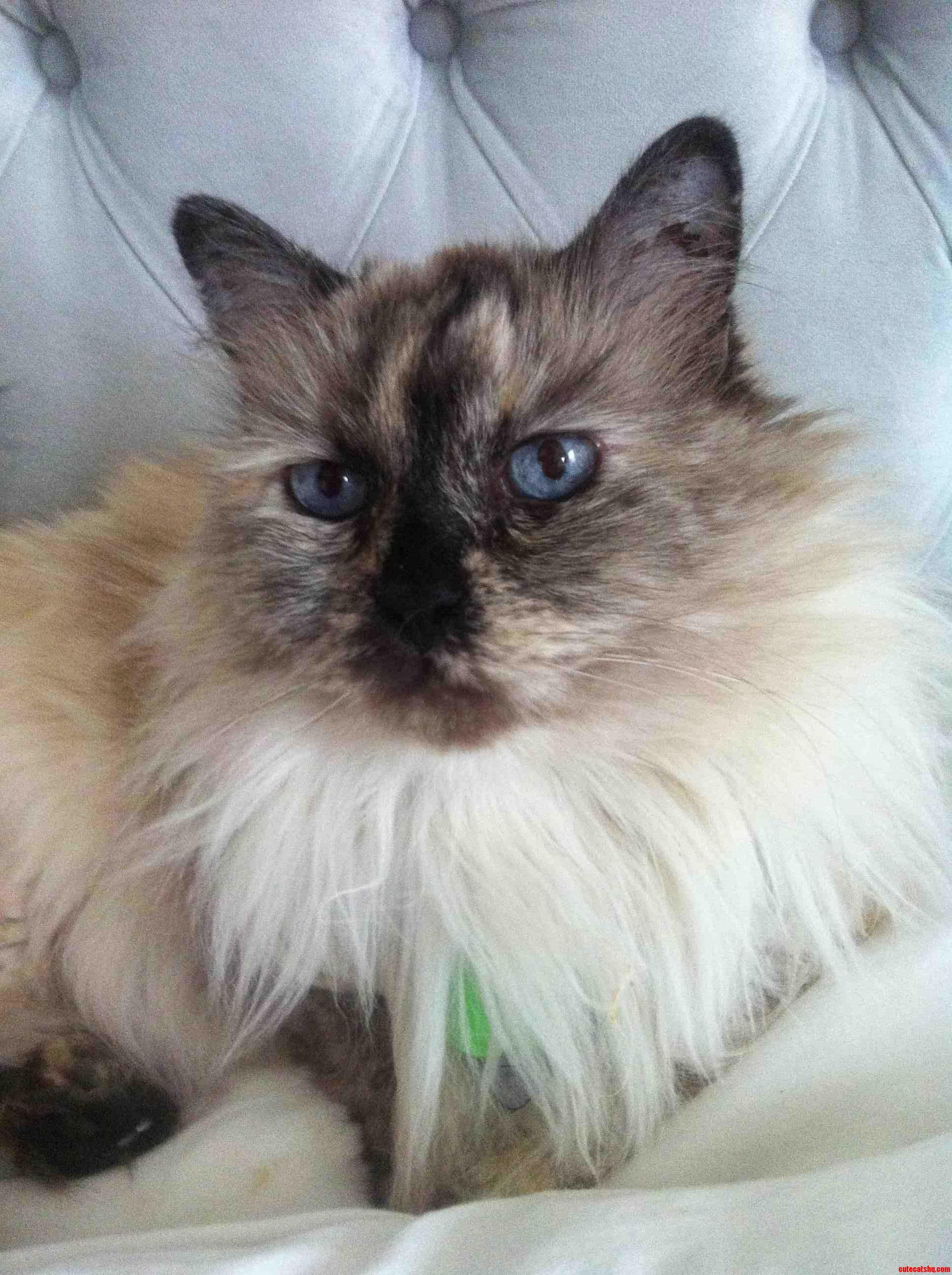My 16 Year Old Princess Shes Perfect.