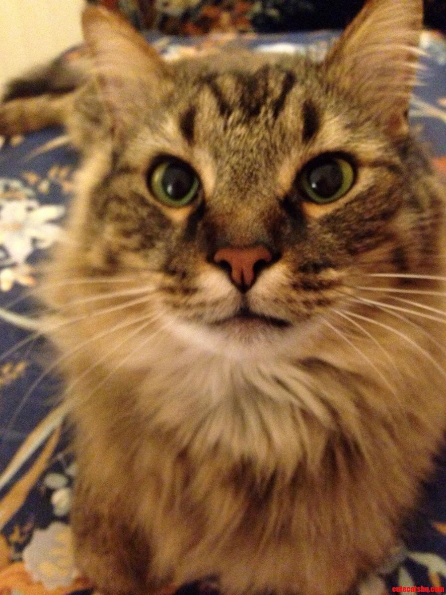 My 30 Pound Baby Cat.