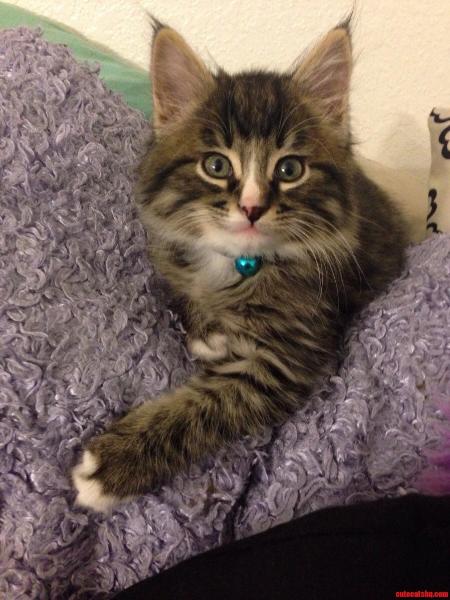 My 6 Week Old Kitten Simon.