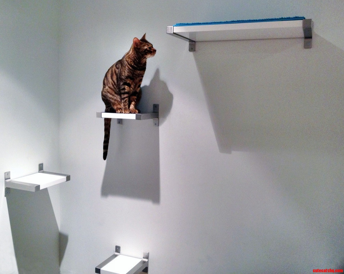 My Bengal Loves To Climb So I Made Her A Cat Condo Out Of Ikea Shelves. More Pics In Comments