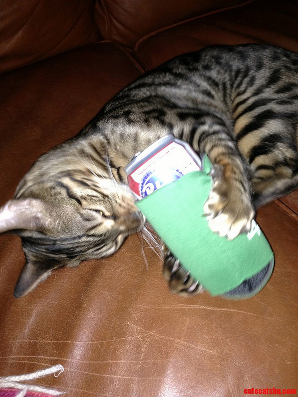 My Bengal Pabst Out