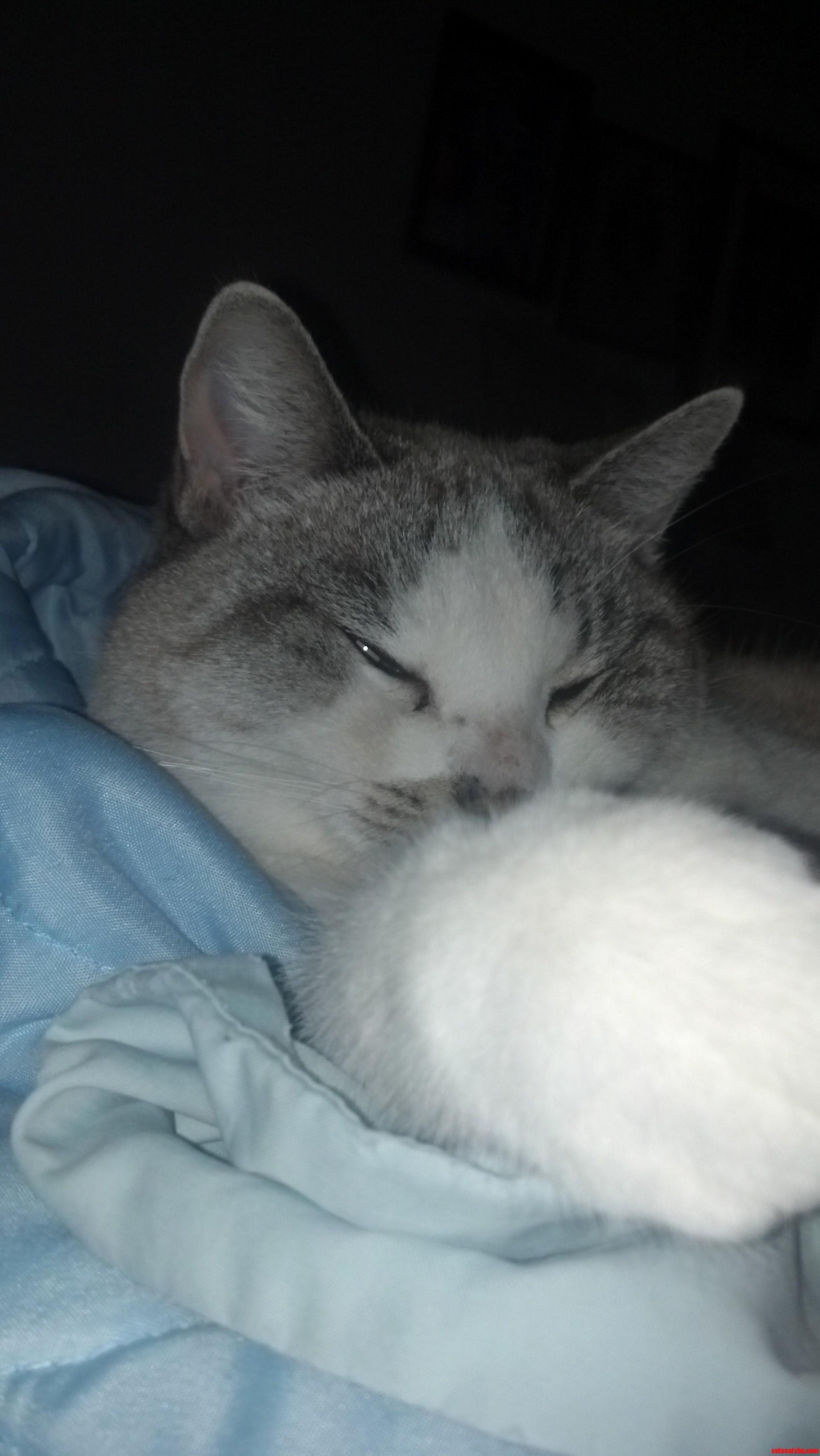 My Cat Hates Me.