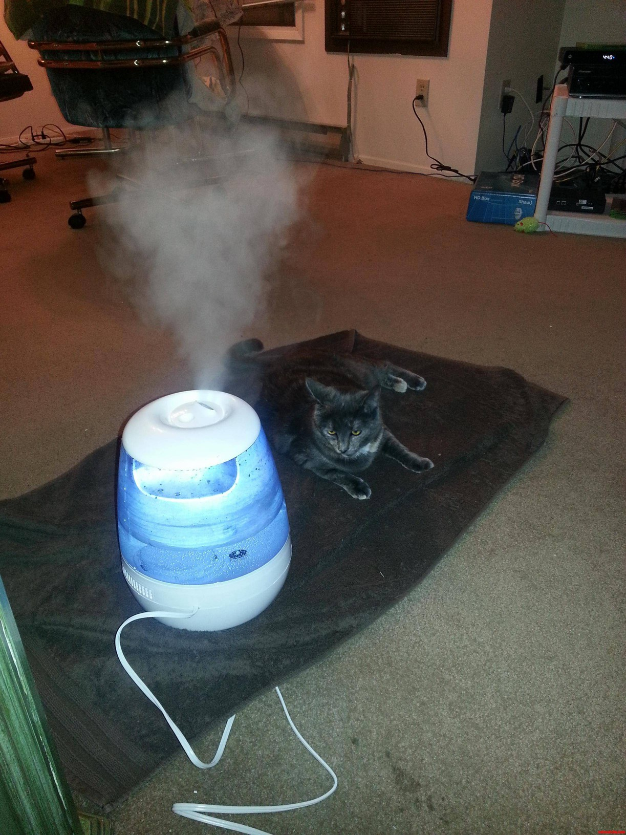 My Cat Loves The New Humidifier