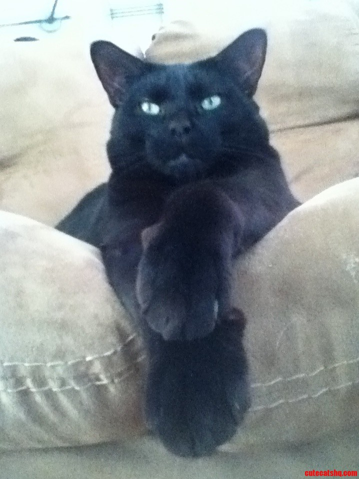 My Cat Puma Is Quite The Gentlemen .