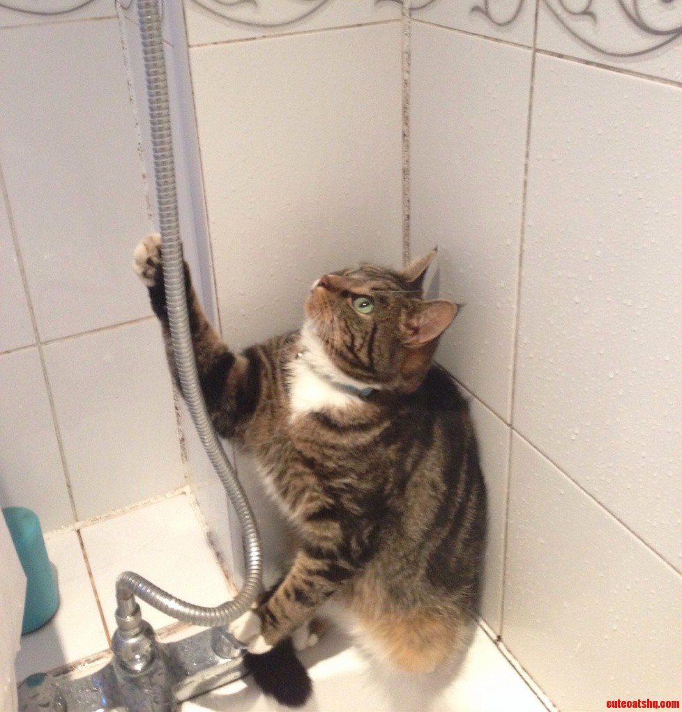 My Cat Rocky Loves To Attack The Last Droplets Out Of The Shower Head