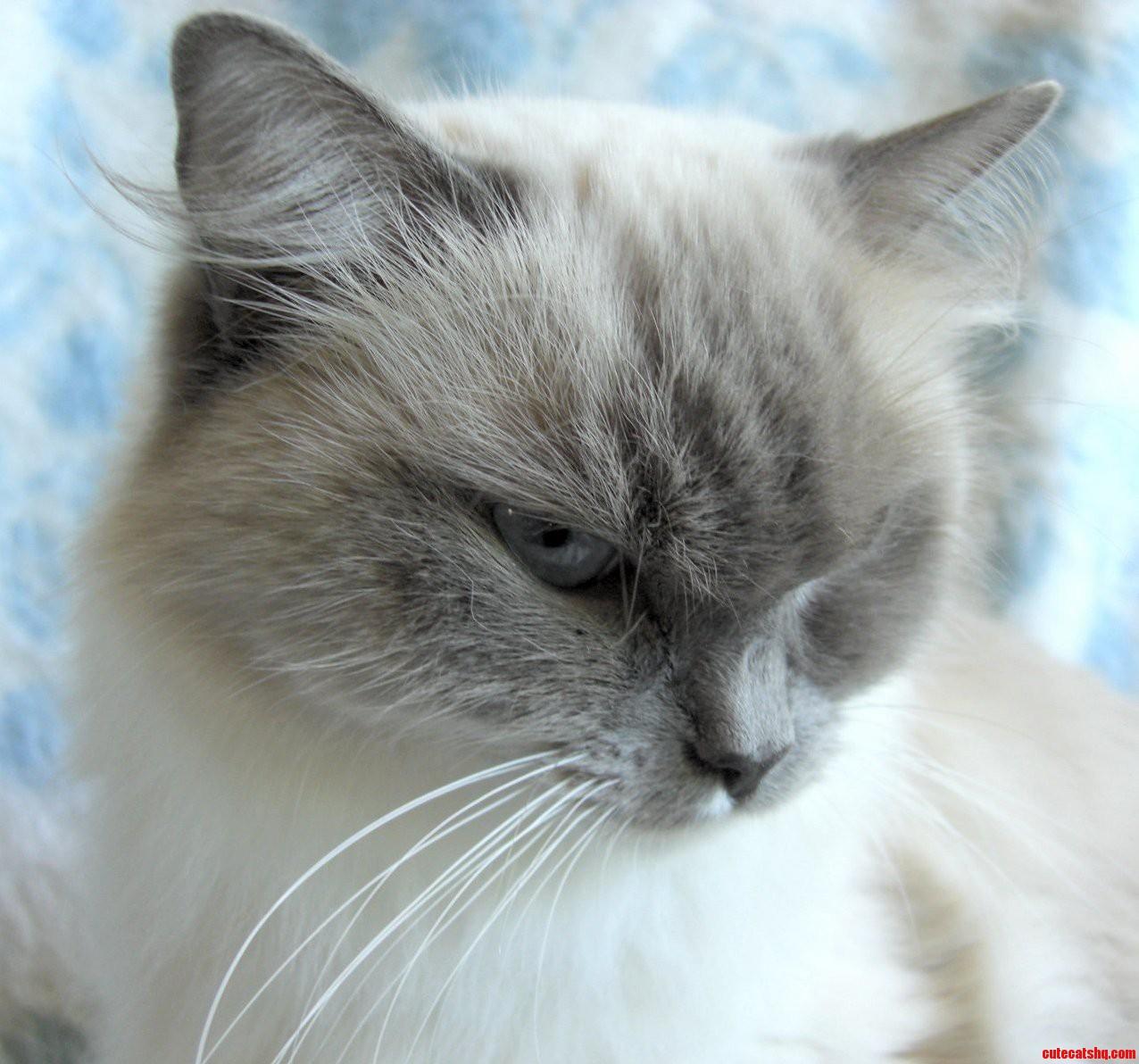 My Favourite Photo Of My Cat