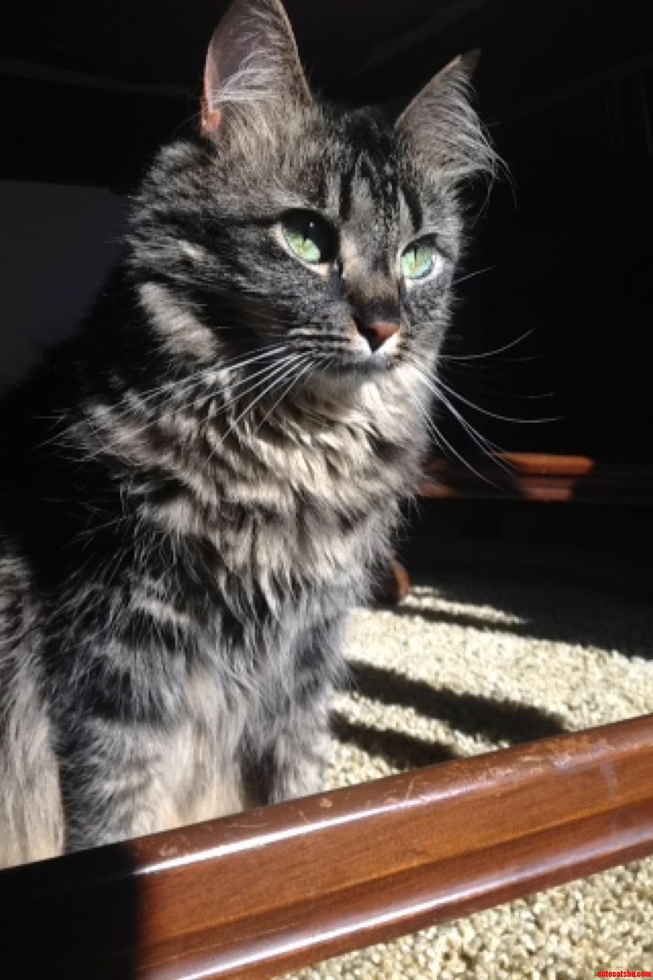My Kitty Margot Basking