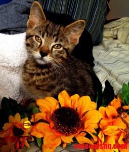 My Old Roommates Kitten. Im Still Devising Ways To Steal Him.