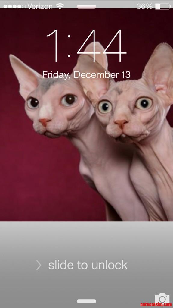 My Phone Wallpaper. Always Cheers Me Up.