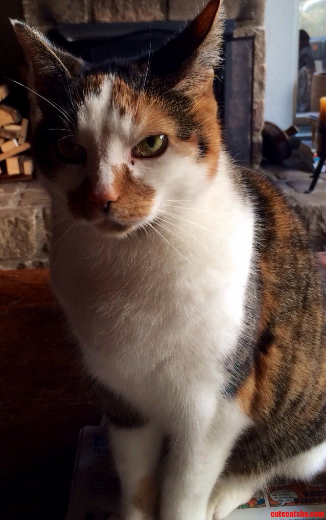 My Pretty Kitty Bindi