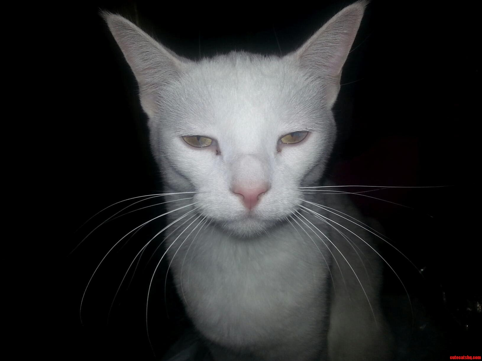 My Sisters Cat Does Not Like His Picture Taken Apparently.