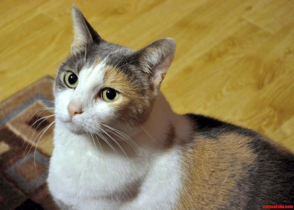My Willamina – Velcro Cat Watch Dog